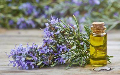 Propiedades cosméticas del aceite esencial de romero