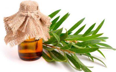 Propiedades del aceite esencial del árbol de té