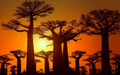 Aceite de baobab, principales beneficios para la piel