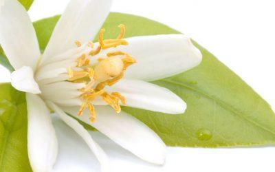 Beneficios extracto de azahar